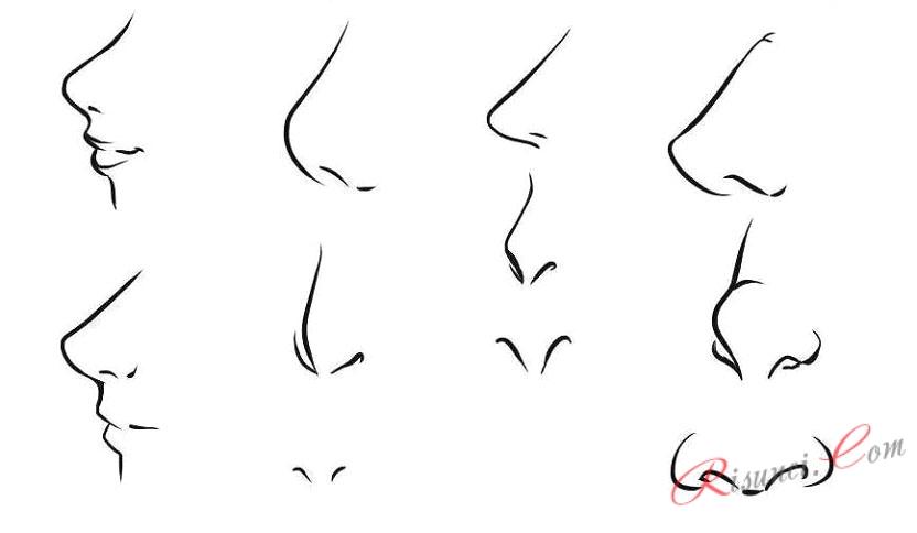 виды носов