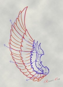 средний ряд перьев