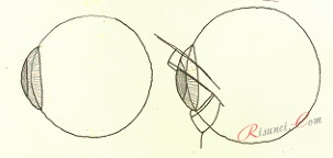 строение глаза для рисования
