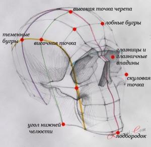 Форма головы