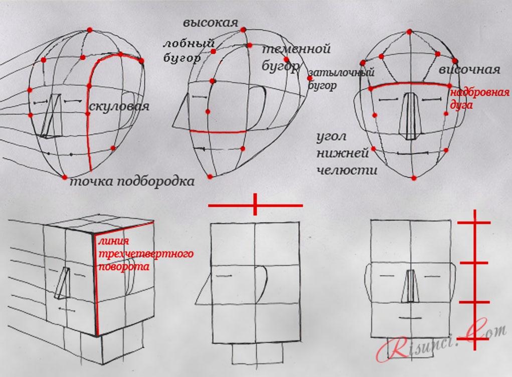 Построение и пропорции в рисунке