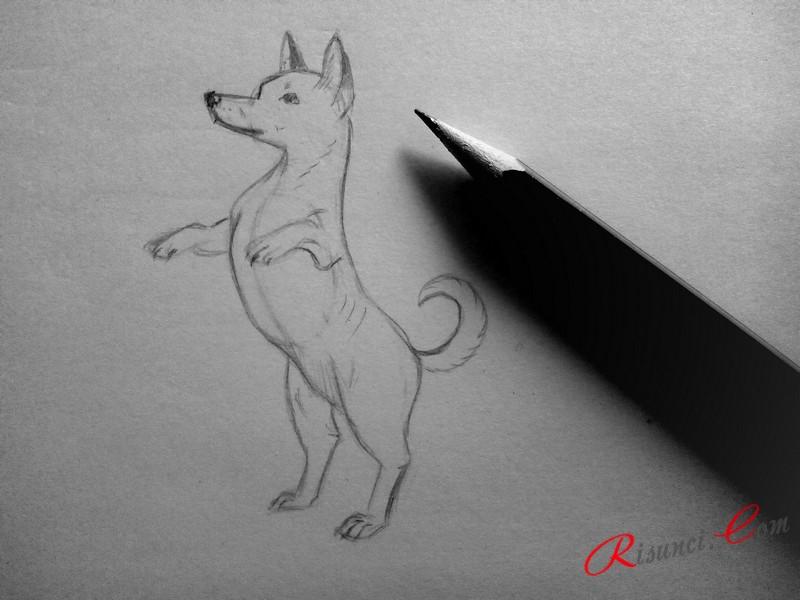 нарисуем глаз, нос и рот животного