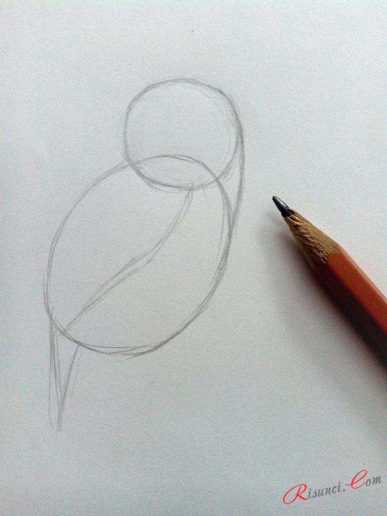 прорисуем контур одного крыла и часть хвоста
