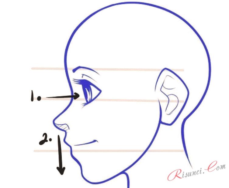 Как нарисовать глаза в профиль