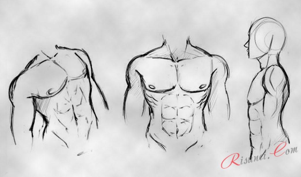 Картинки тело парней для срисовки