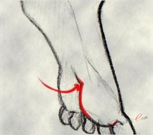 мягкие части плоти ноги