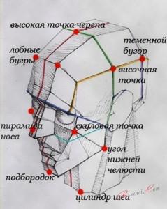 структура головы для рисования