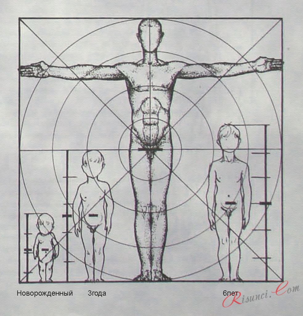 Пропорции тела при рисовании