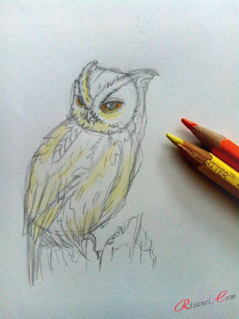 добавим цвета для иллюстрации совы
