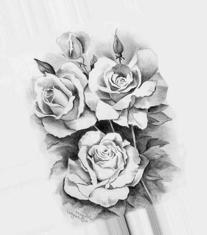 рисунки роз карандашом для срисовки, фото 3