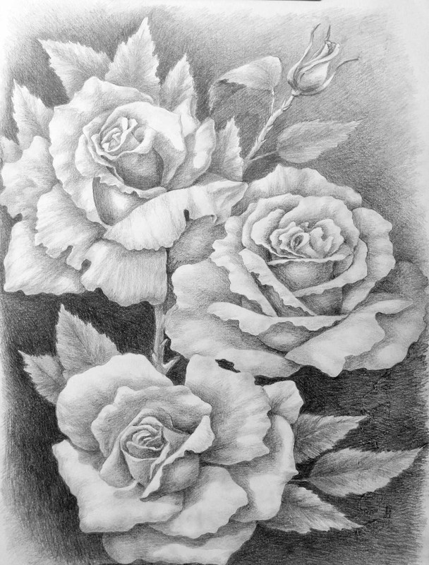 рисунки роз карандашом для срисовки, фото 5