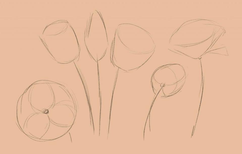 rакой формы может быть тюльпан