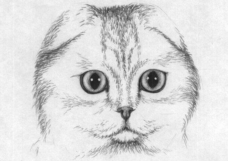 классные рисунки для срисовки для девочек фото 15