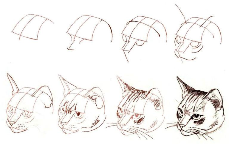 рисунки карандашом поэтапно материала данном случае
