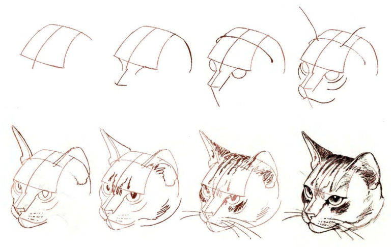 рисунки карандашом поэтапно