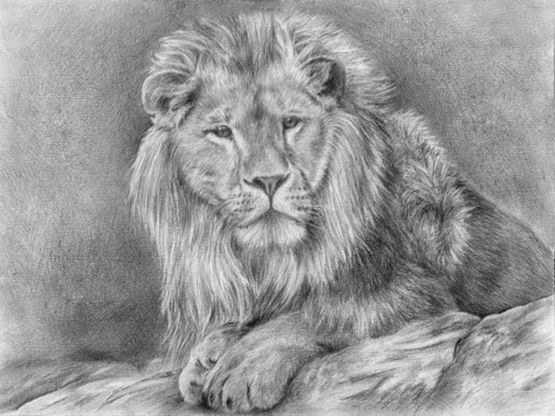 как нарисовать рисунок льва карандашом