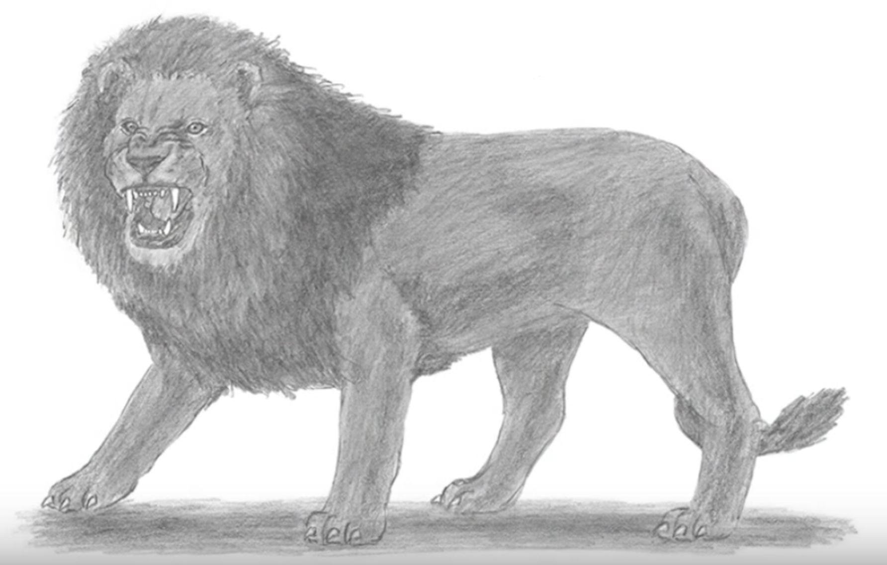 кисунок злого льва карандашом, как нарисовать фото 5
