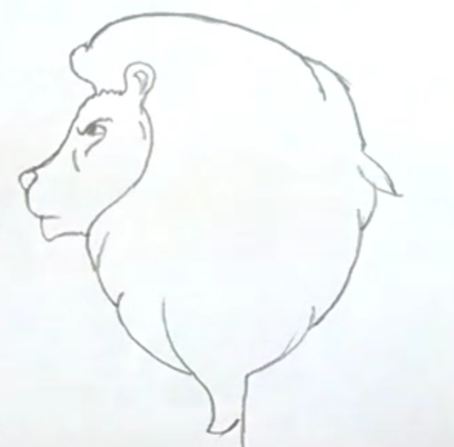 рисунок льва карандашом для начинающих фото 1