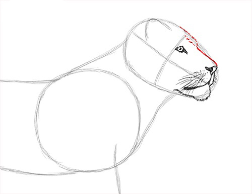 как нарисовать льва карандашом поэтапно мастер-класс + фото 2