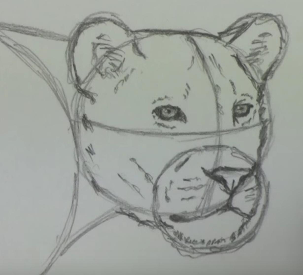 фото рисунки львов карандашом, идеи фото 2