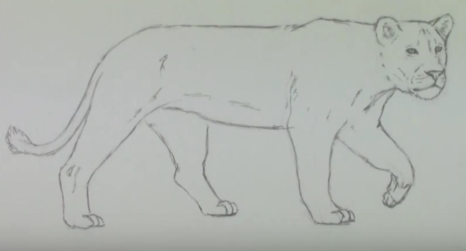 фото рисунки львов карандашом, идеи фото 4
