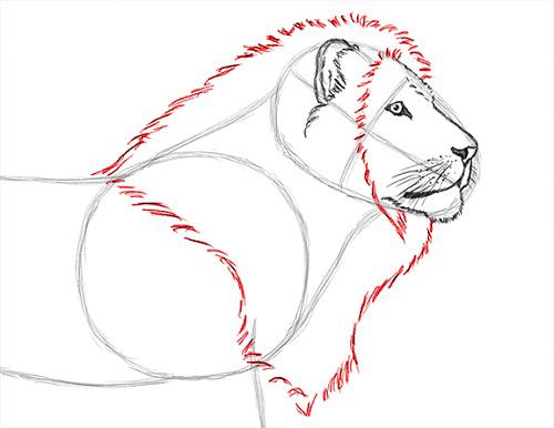 как нарисовать льва карандашом поэтапно мастер-класс + фото 3