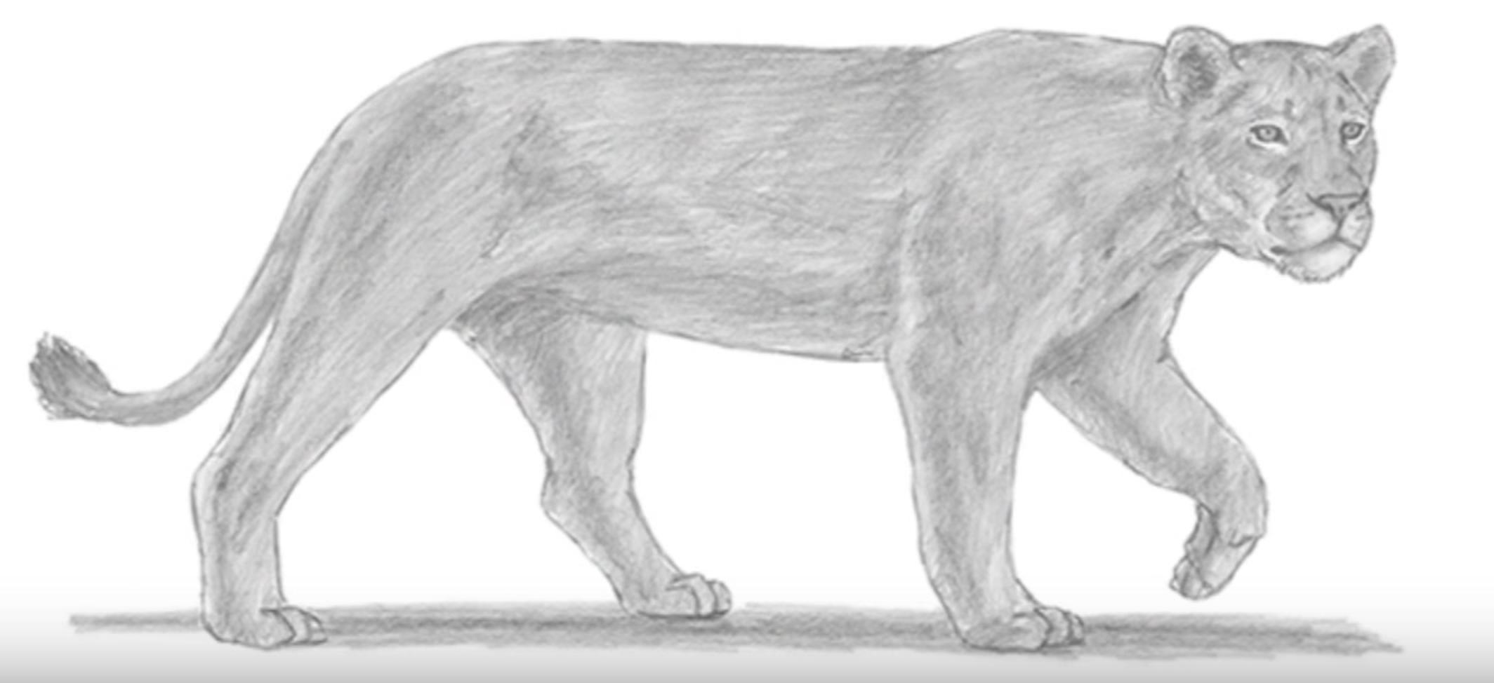 фото рисунки львов карандашом, идеи фото 5