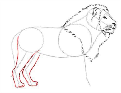 как нарисовать льва карандашом поэтапно мастер-класс + фото 4