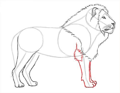 как нарисовать льва карандашом поэтапно мастер-класс + фото 5