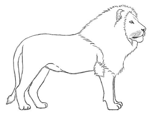 как нарисовать льва карандашом поэтапно мастер-класс + фото 6