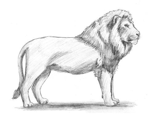как нарисовать льва карандашом поэтапно мастер-класс + фото 7