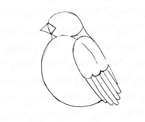 снегирь рисунок карандашом, как нарисовать на ветке мастер-класс + фото 2