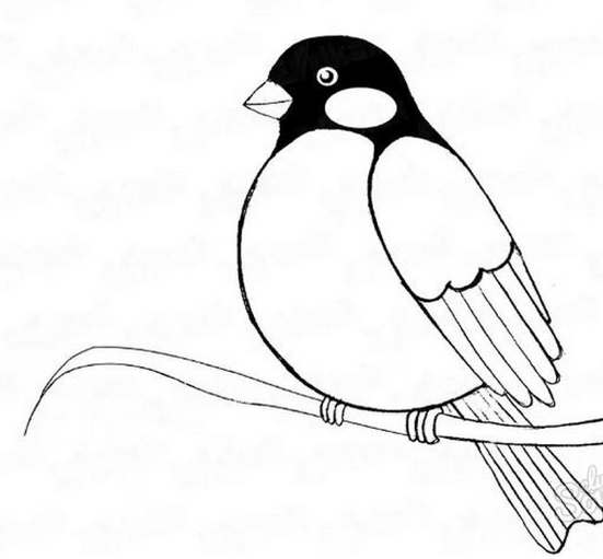 снегирь рисунок карандашом, как нарисовать на ветке мастер-класс + фото 4