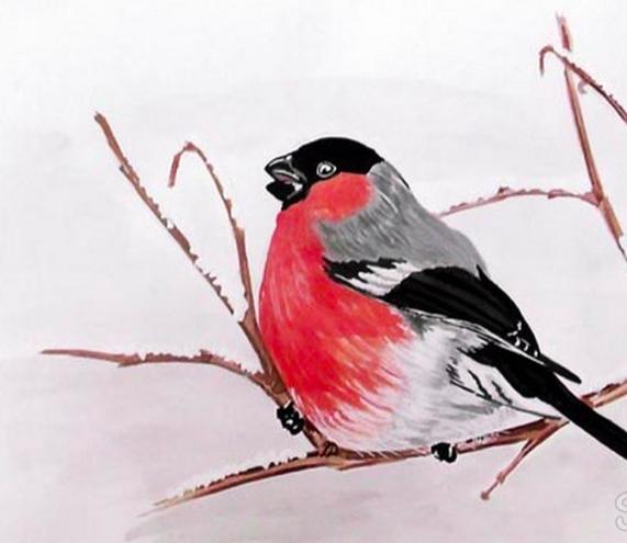 снегирь рисунок карандашом, как нарисовать на ветке мастер-класс + фото 5