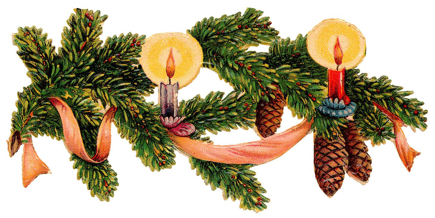 елка и еловые веточки фото 3