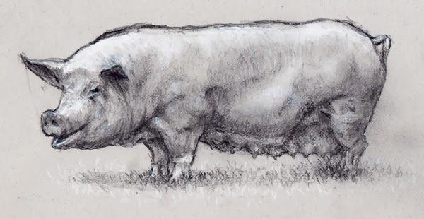 символ года: как поэтапно нарисовать свинью к Новому году 2019