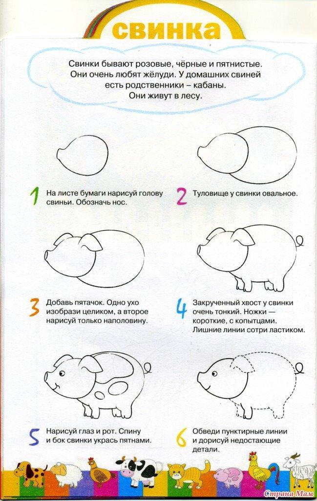 как поэтапно нарисовать свинью (символ 2019 года) фото 4
