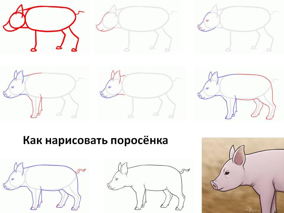 как поэтапно нарисовать свинью (символ 2019 года) фото 3