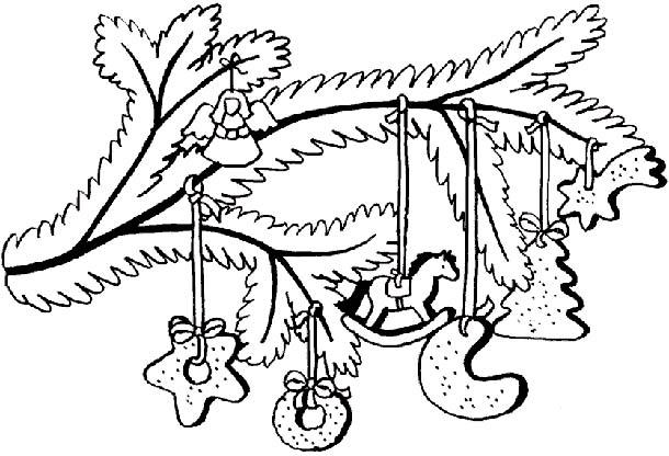еловые ветки фото 1