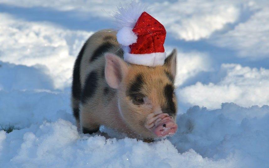 свинья - символ года 2018 своими руками: мастер-класс, пошаговые схемы, фото