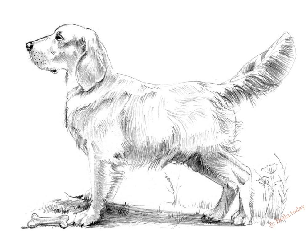 идея №6 - собака фото 1