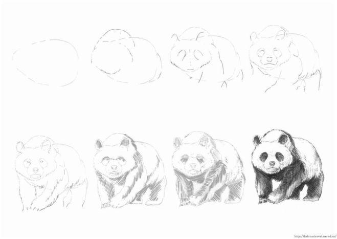 панда рисунок карандашом, фото идеи + мастер-классы 1