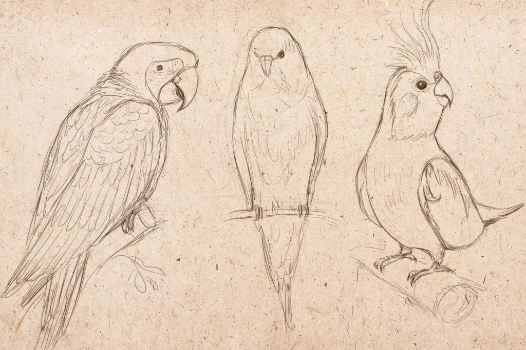 попугай рисунок карандашом