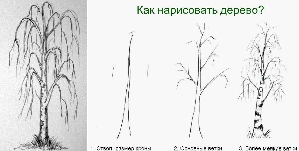 береза зимой рисунок карандашом фото 1