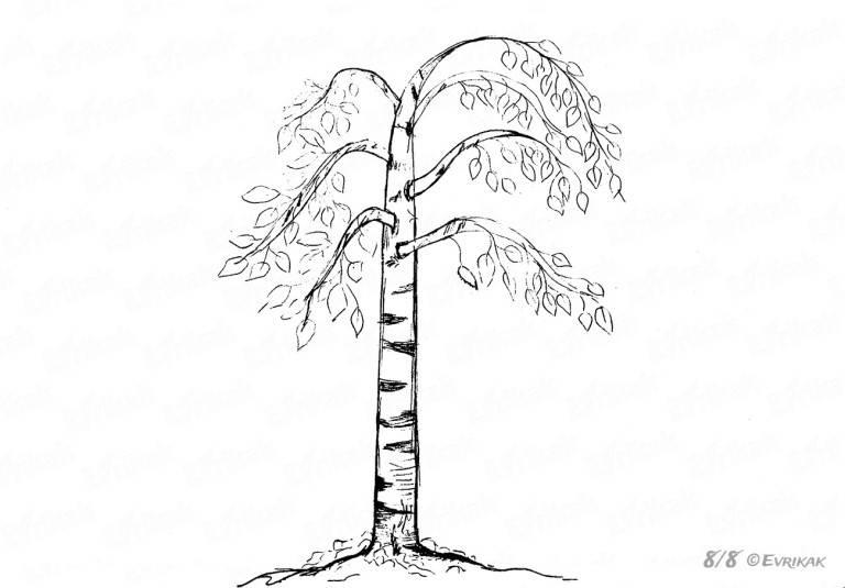 рисунок березы карандашом осенью, фото 2