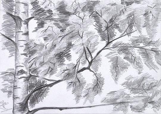 красивые рисунки березы карандашом, фото идеи 2