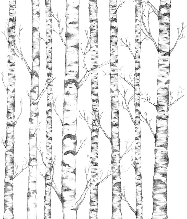 красивые рисунки березы карандашом, фото идеи 3