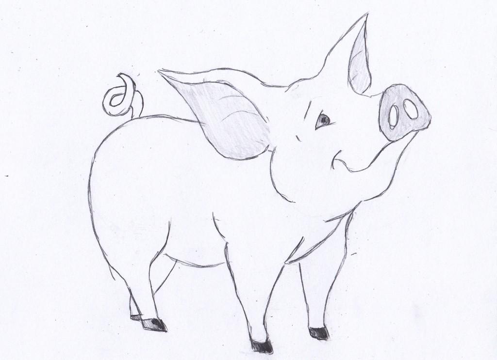 животные фото 1