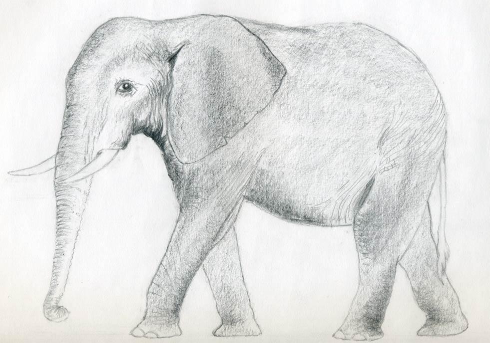 животные фото 3