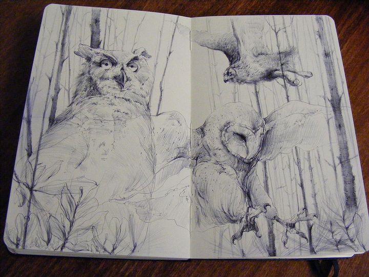 зарисовка диких и домашних животных фото 3